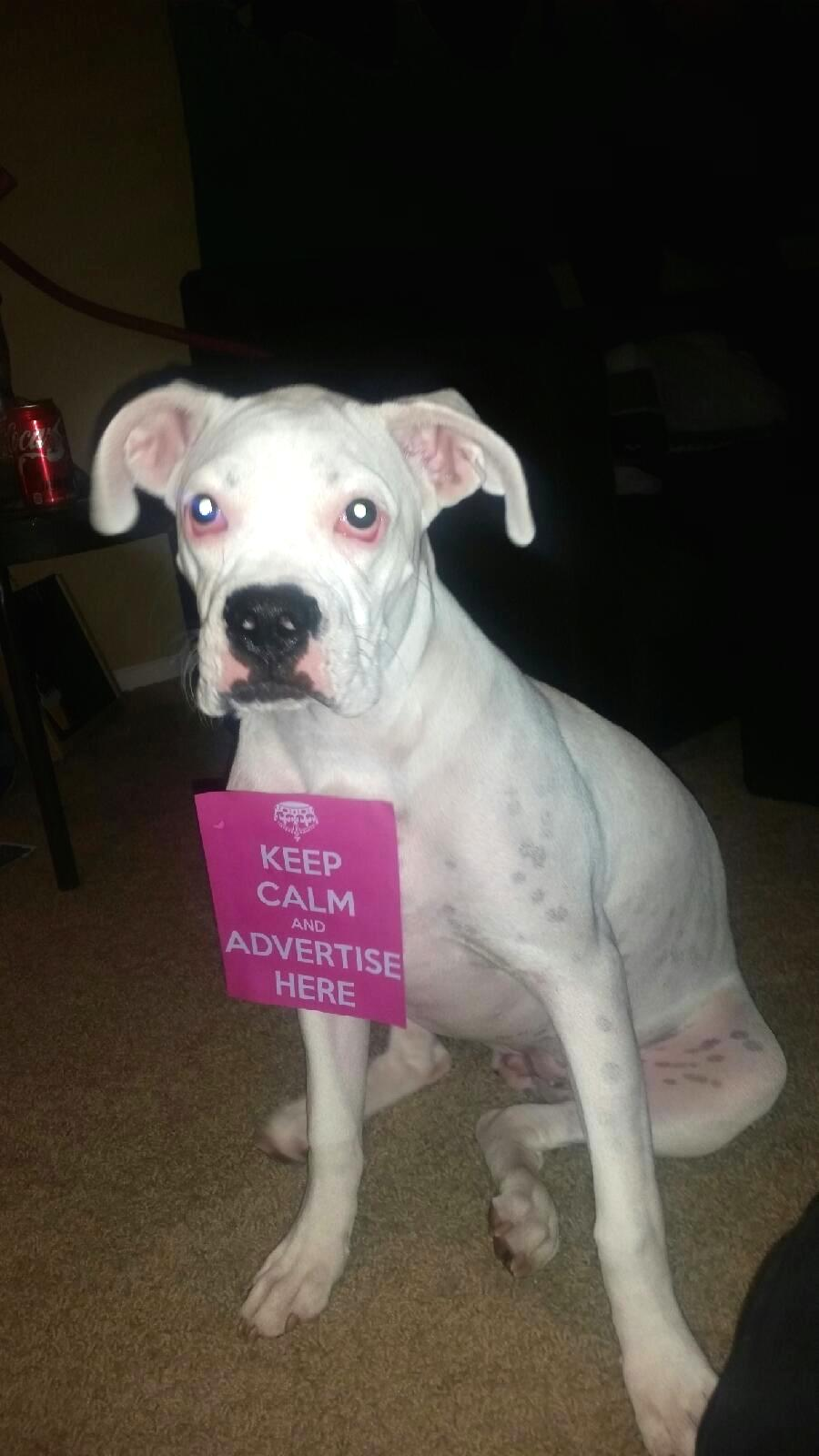 have my boxer pup model your sign