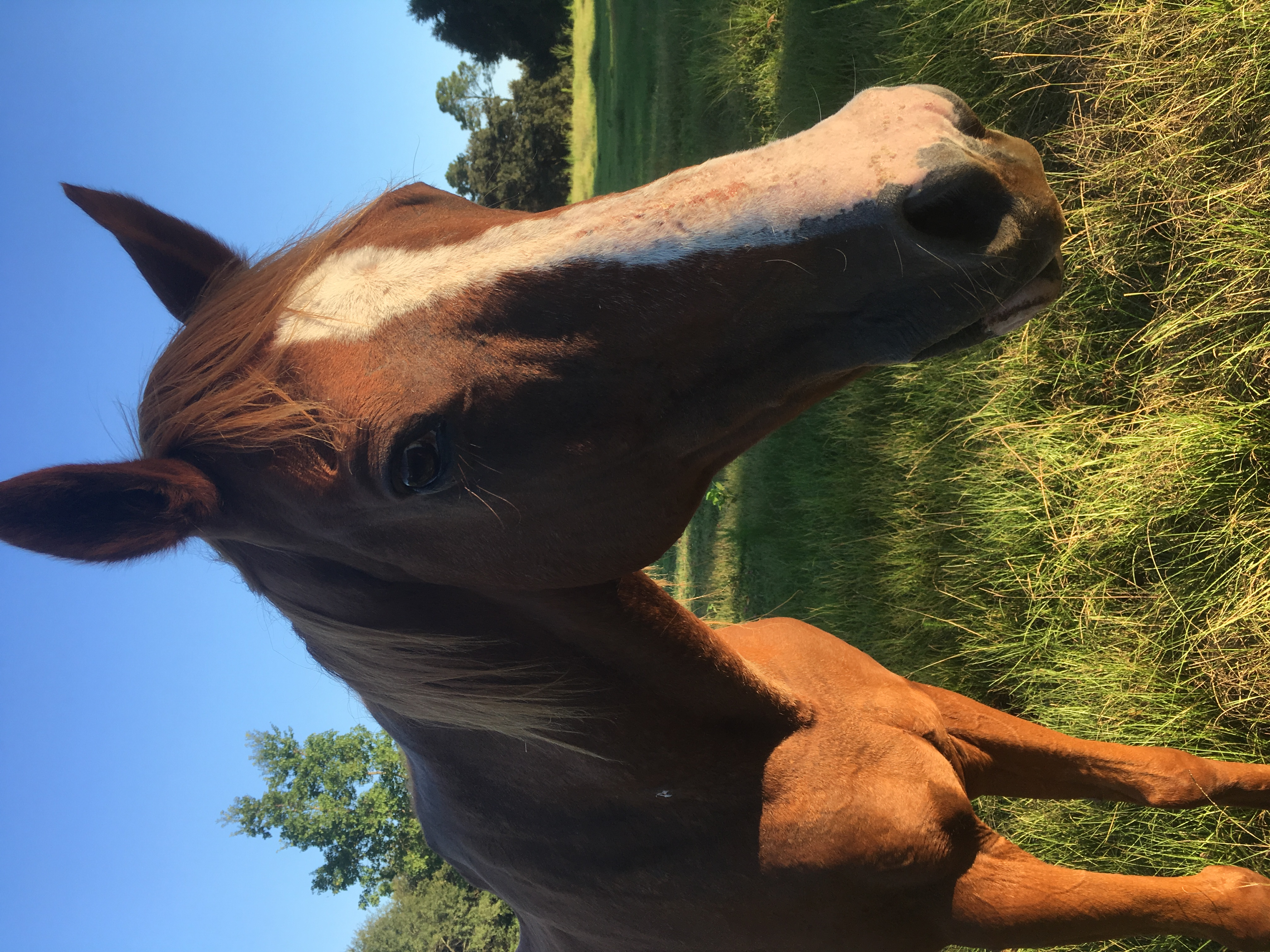 write a detailed sale ad for your horse