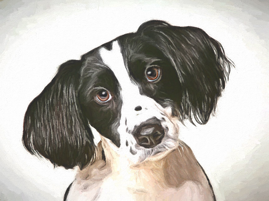 Paint your Pet into an artistic painting