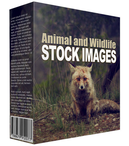 send you Animal and wildlife images
