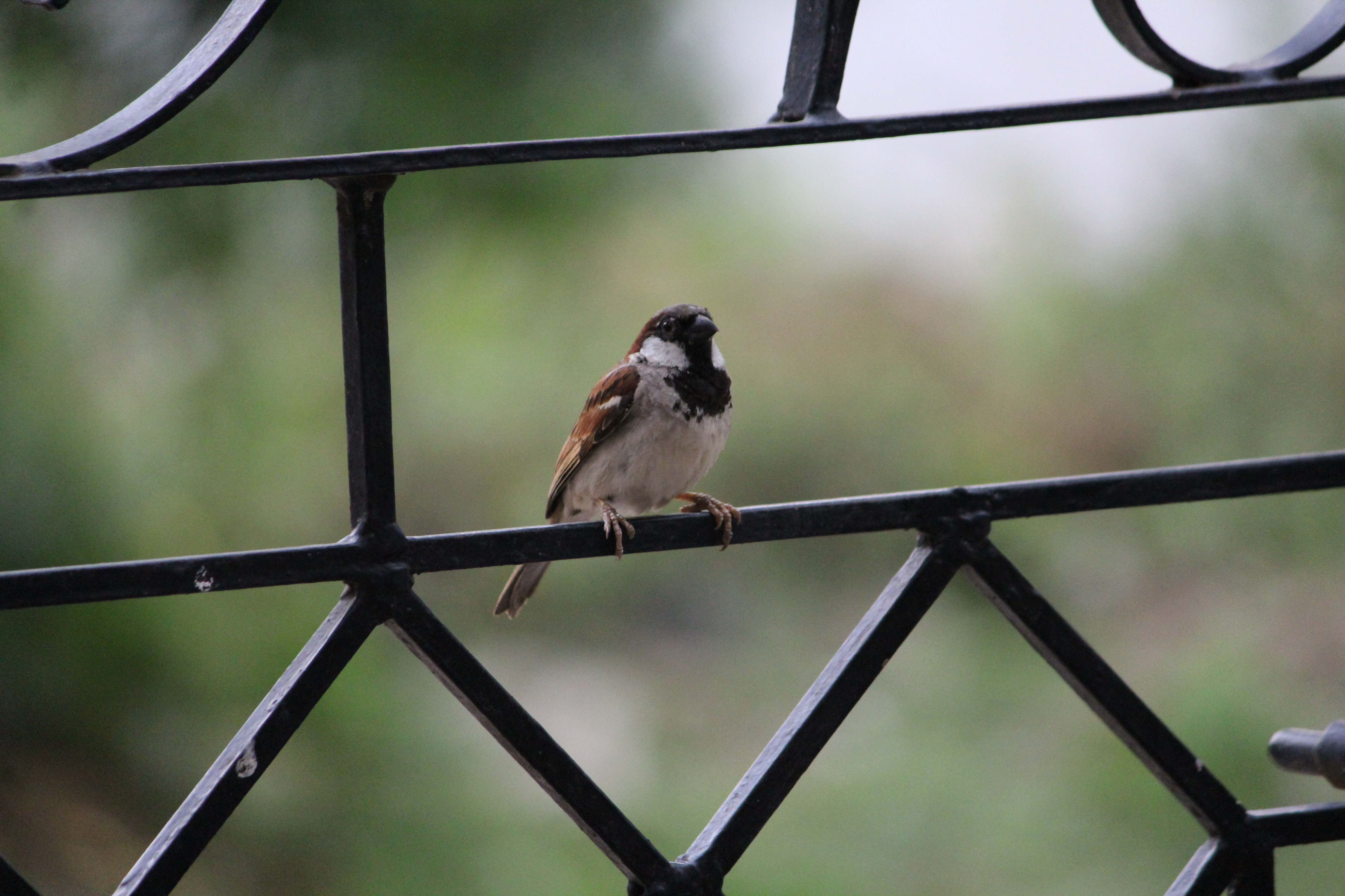 sell sparrow photographs clicked by me