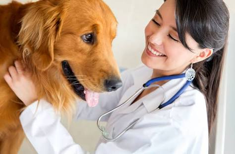 write a veterinary related article