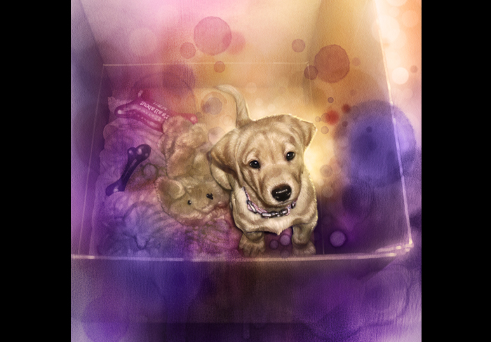 draw your pet in watercolour style
