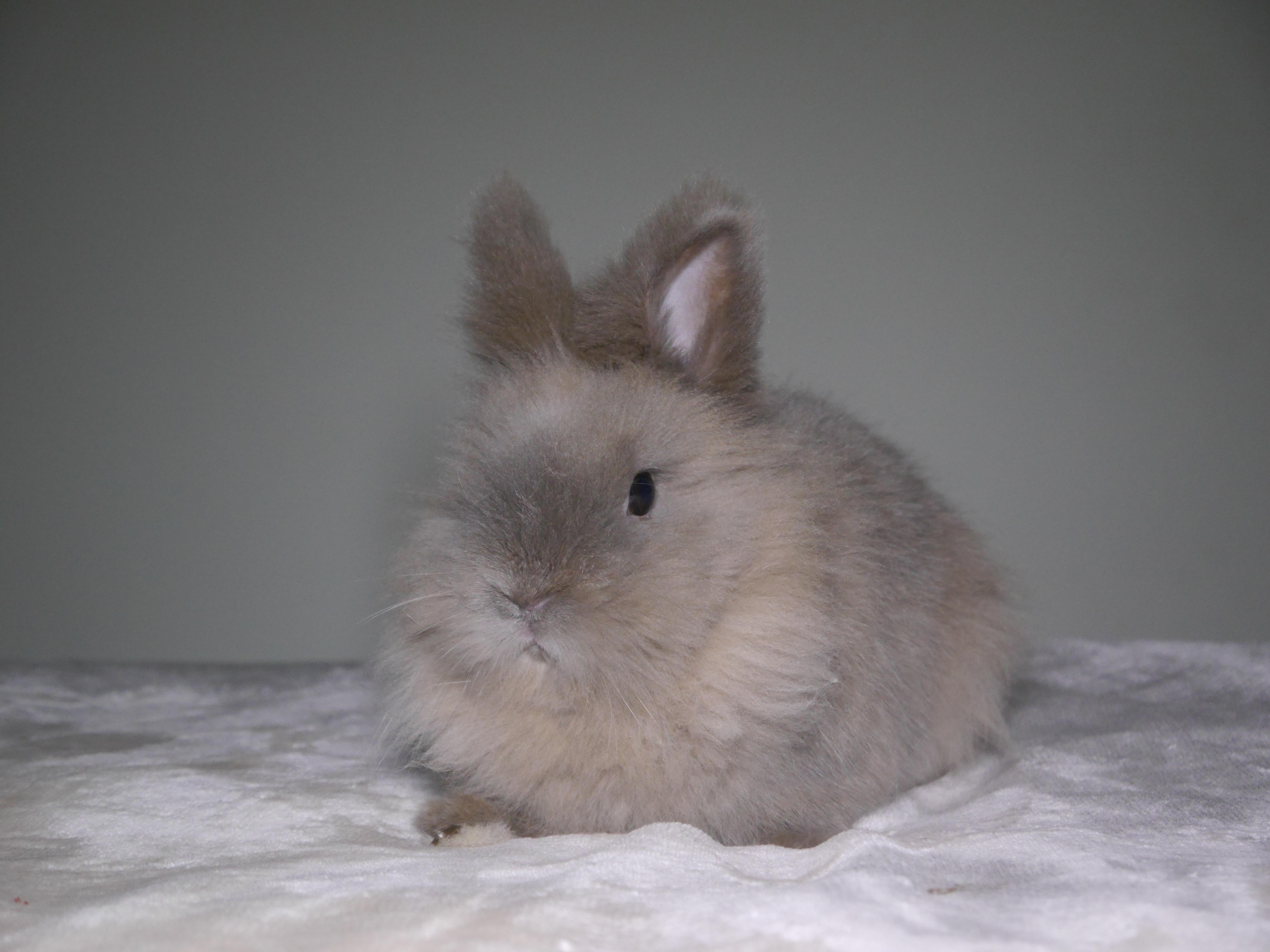 Put your message or logo next to my bunny