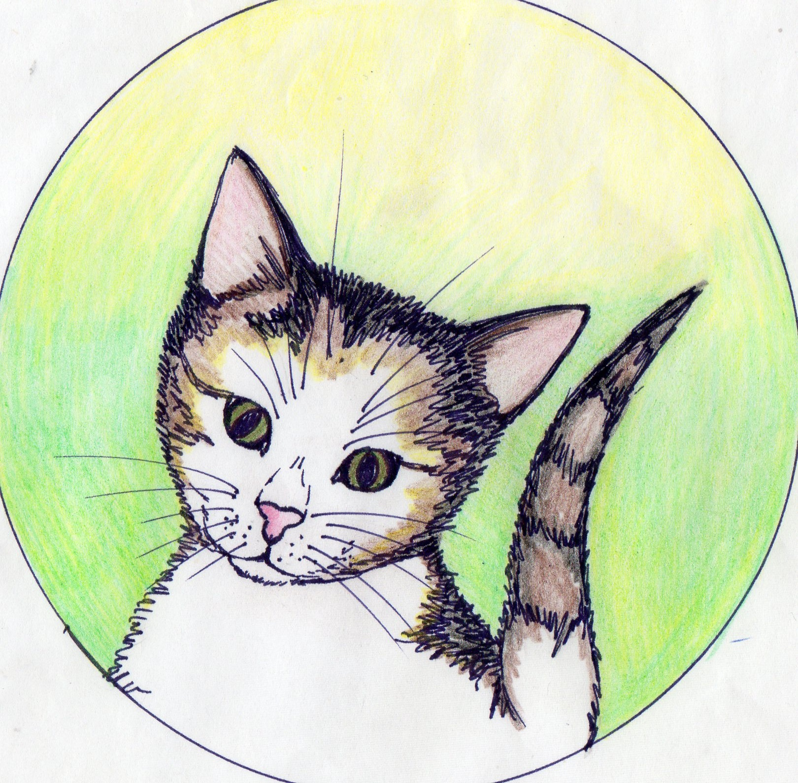 make ANY drawing or ilustration for you