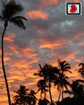 photoshop your logo into 5 original nature photo images for social sharing from my personal photo portfolio offering Florida sunset scenes, gators & waterways, flowers, palm trees or butterflies.