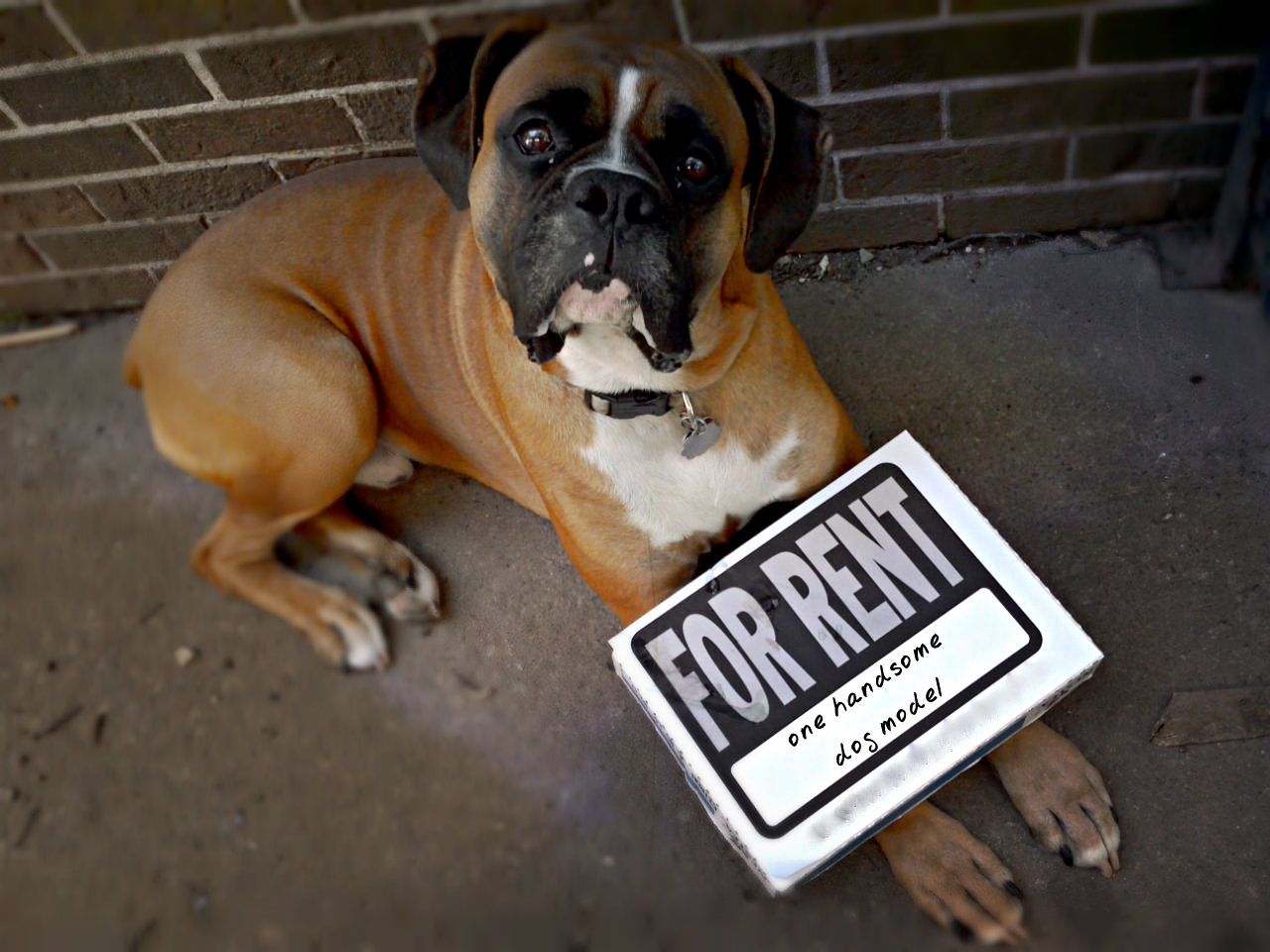 shoot 2 quality pics with experienced dog model & your sign/logo