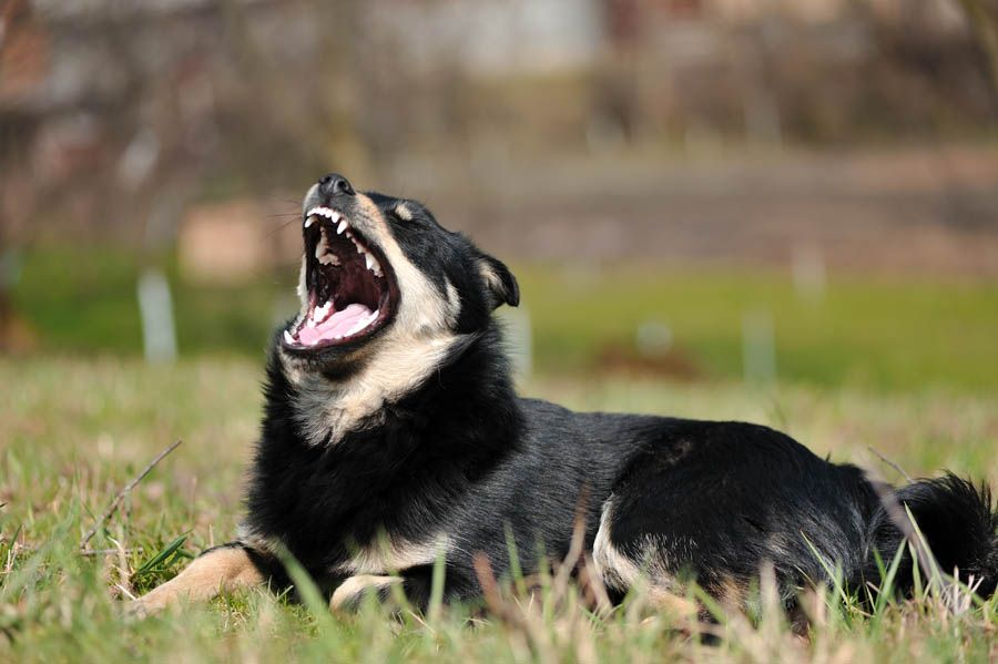 show you how to stop your dog from barking like a madman