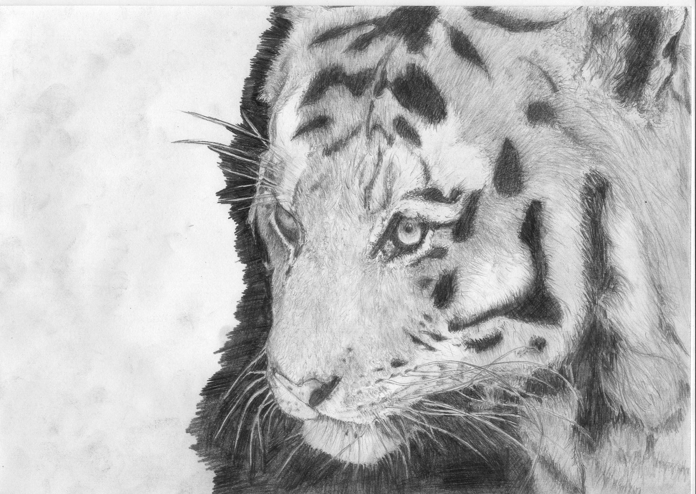 do detailed pencil drawings