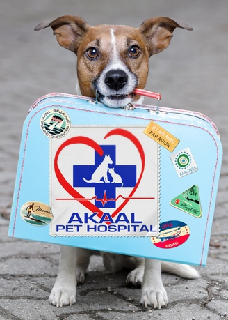 make traveller dog will PROMOTE your logo or text